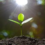 ヒプノセラピーと植物の癒し