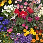 【終了】『2019花まつりワークショップ~世界でひとつだけのわたし~