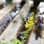 【5/20.24.27完全予約制】『バッチフラワー花の癒しカフェ』オープンします