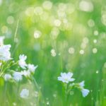 【終了】2020夏に咲く*Flowering*AFPオンライン連続クラス